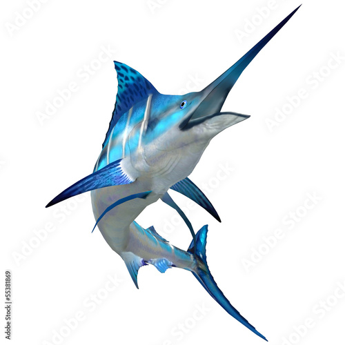 Marlin Fish on White Wallpaper Mural