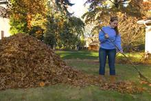 Raking Leaves Girl Next To Leaf Pile