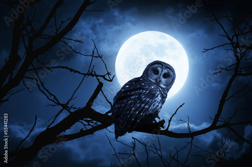 Owl Watches Intently Illuminated By Full Moon On Halloween Night Wallpaper Mural