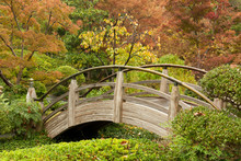 Arch Bridge In A Japanese Garden