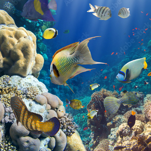 Coral and fish - 55452206