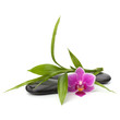 Spa and healthcare concept. Orchid and stones.