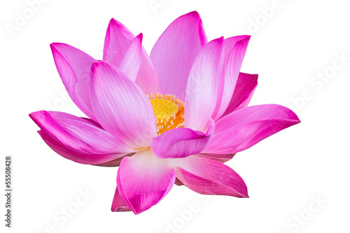 Foto op Aluminium Lotusbloem Pink lotus isolated on white background