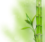 Fototapeta Sypialnia - Green background with bamboo