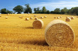 canvas print picture - Hay bales in golden field