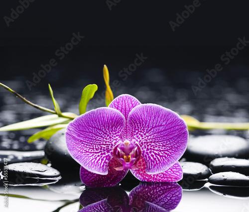 """Bild auf Leinwand /""""zen garden with black stones and pink waterlily/"""""""