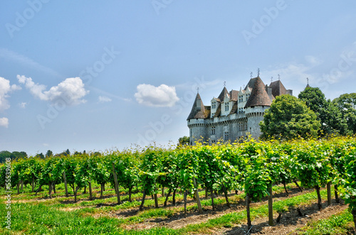 Photo France, vineyard and the castle of Monbazillac in Dordogne