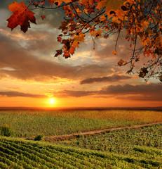 Fototapeta Vine landscape in Chianti, Italy