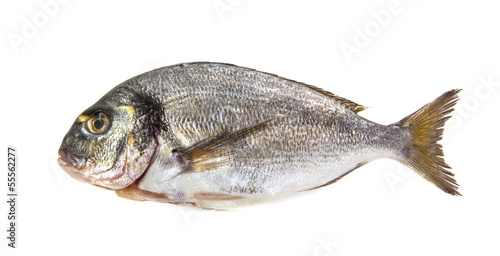 Freash Seabream isolated on white