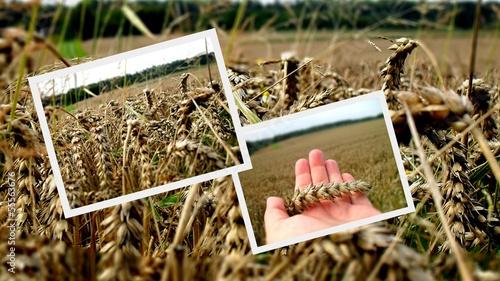 Foto op Canvas Bakkerij Collage Landwirtschaft Getreidestand