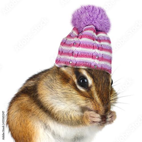 portret-smieszny-chipmunk-z-kapeluszem-na-bielu