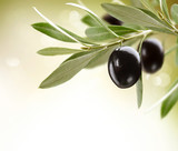 Olives. Black Ripe Olive on a tree