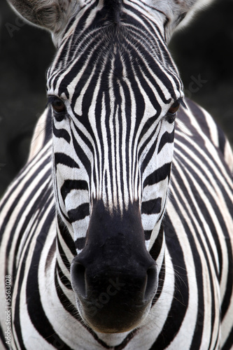 Canvas Prints Zebra Zebra head