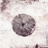 coral on the grunge background - 55624631