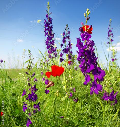 Naklejka premium Letnie kwiaty