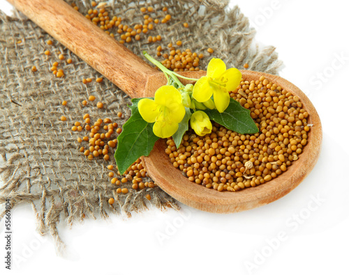Fotobehang Kruiden 2 Mustard seeds in wooden spoon with mustard flower isolated