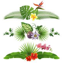 Tropical Borders