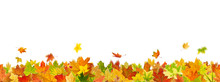 Seamless Pattern Of Maple Autumn Leaves, Lying On The Ground.