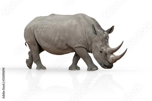 Spoed Foto op Canvas Neushoorn Nashorn freigestellt auf weiß