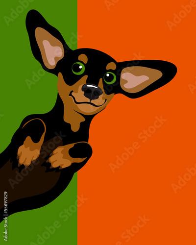 zabawny-pies-na-zielono-pomaranczowym-tle