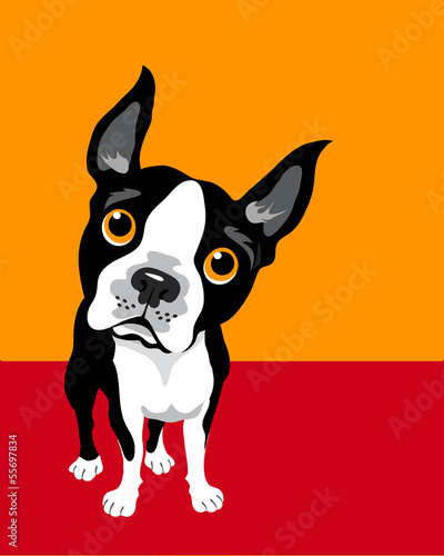 Foto op Plexiglas Pop Art funny illustration of Boston Terrier