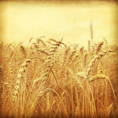 FototapetaGrunge style photo of wheat field.