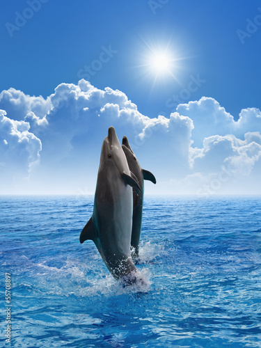 Dolphins jumping - 55708897