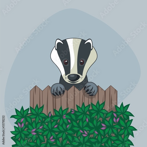 Cute badger standing up, over somebody's wooden fence Poster Mural XXL