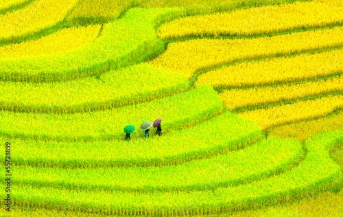 Garden Poster Rice fields Three women visit their rice fields in Mu Cang Chai