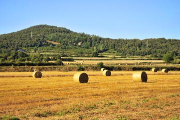 Obraz na Szkle Wiejski Paja en el campo