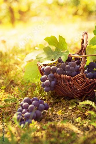 zbioru-winogron