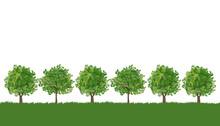 木 風景 Line Of Trees On Lush Grass