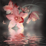 Orchidea i motyle