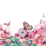 Fototapeta Kwiaty - Pink flower of an Oriental cherry and butterfly;