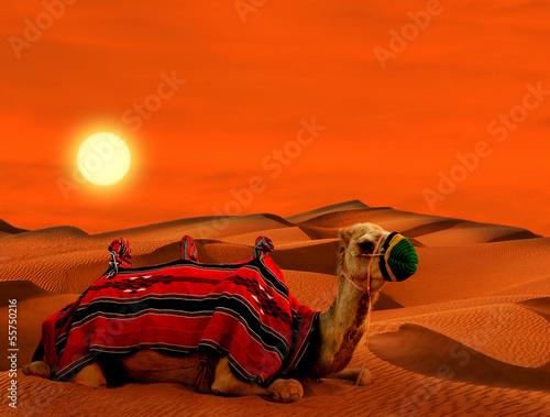Tourist camel on sand dunes in the desert Fototapete