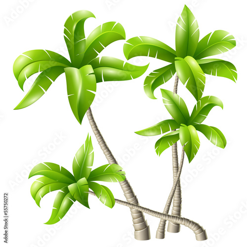 Poster Vegetal Ñoconut palms