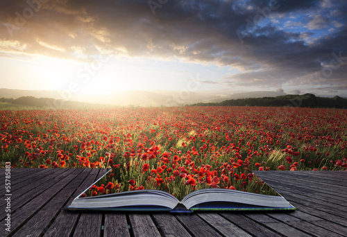 Creative concept pages of book Stunning poppy field landscape un
