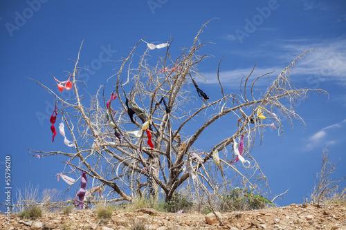 Fotografia, Obraz  Dead Tree Covered in Womens Bras