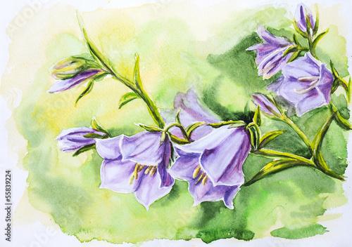 akwarela-malarstwo-kwiatow-dzwonka