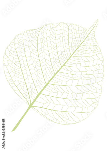Poster Squelette décoratif de lame leaf