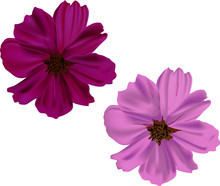 Pink And Purple Flowers Isolated On White
