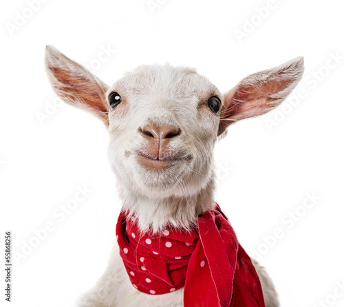 Photographie funny goat