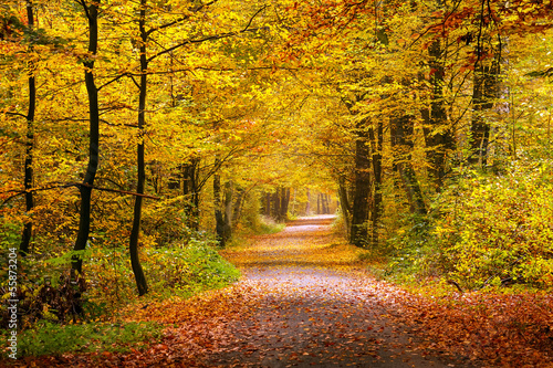 Fotobehang Weg in bos Autumn forest