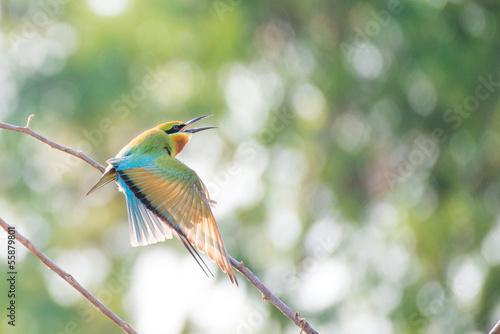Fotografie, Obraz  bee-eater bird