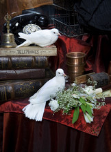 Pombos Brancos Em Uma Vindima Ainda Vida