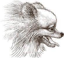 Head Of Lap Dog