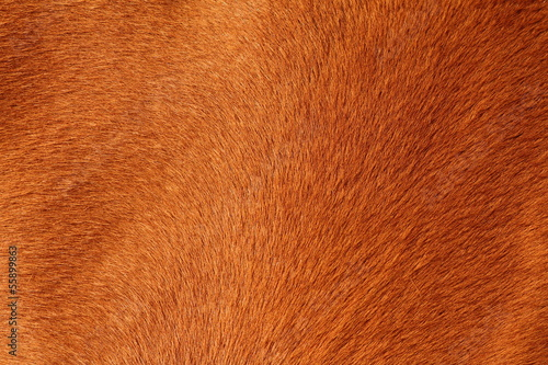 Foto op Canvas Paarden textured pelt of a brown horse
