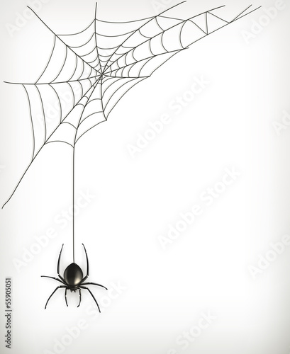 Fototapeta Spider web