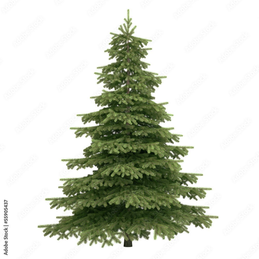 Obraz Spruce Tree Isolated fototapeta, plakat