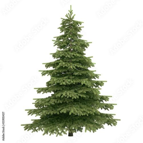 Fototapeta Spruce Tree Isolated obraz